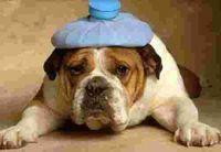 Hangover_dog