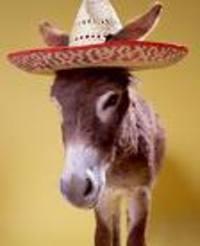 Donkey_sombrero